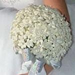geurnoot bruidsbloem