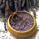 geurnoot lavendel